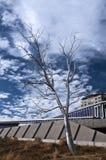 Beeldhouwwerk dat in Park van het Beeldhouwwerk van Seattle het Olympische wordt verdeeld Stock Fotografie