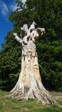 Beeldhouwwerk in een boomboomstam Royalty-vrije Stock Afbeeldingen