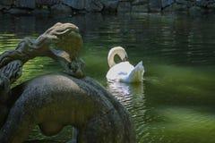 Beeldhouwwerksamenstelling en witte zwaan in kleine vijver Royalty-vrije Stock Fotografie