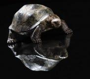 Beeldje van schildpad stock afbeelding