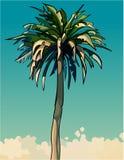 Beeldverhaal getrokken lange het uitspreiden zich decoratieve palm Royalty-vrije Stock Foto