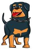 Beeldverhaal Rottweiler met tong die uit plakt Stock Foto