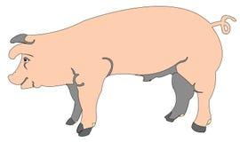Beeldverhaal van een varken Stock Afbeelding