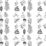Beeldverhaal waterwall op witte achtergrond Natuurlijke materialen Bosprentbriefkaar Bosvruchten, bladeren, takken Zwart-wit naad royalty-vrije illustratie