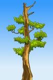 Beeldverhaalboom met bladeren zonder bovenkanten Royalty-vrije Stock Afbeeldingen