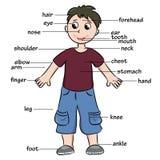Beeldverhaalkind Woordenschat van lichaamsdelen Stock Afbeeldingen