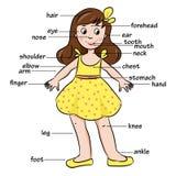 Beeldverhaalkind Woordenschat van lichaamsdelen Stock Foto