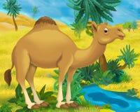 Beeldverhaalscène - de wilde dieren van Afrika - kameel Stock Afbeeldingen
