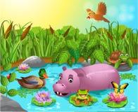 Beeldverhaalvijver met hippo en wilde eend Royalty-vrije Stock Foto's