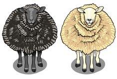 Beeldverhaalwit en zwarte schapen Stock Foto
