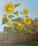 Beeldzonnebloemen achter een Acaciaomheining Canvas, olie Stock Afbeelding