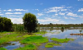 Beelier Wetland Reserve, Western Australia Stock Photo
