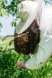 The beemaster checking the swarm of bees Stock Photography
