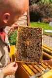 Beemaster que sostiene abejas en el panal Imagen de archivo