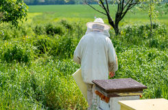 Beemaster working close to the beehives Royalty Free Stock Images