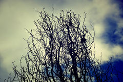 Been van bomen Stock Foto
