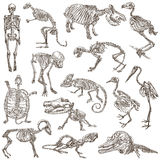 Beenderen en schedels van verschillende dieren - freehands royalty-vrije illustratie