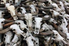 Beenderen van buffelsschedel Stock Afbeeldingen