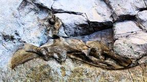 Beenderen van de muurdino van het dinosaurus de Nationale Monument royalty-vrije stock foto
