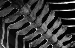 Beenderen van extant die dinosaurus in de lucht worden opgeschort Stock Afbeelding