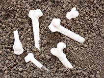 Beenderen van skelet Royalty-vrije Stock Afbeelding