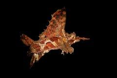 Beenvissen in dark Royalty-vrije Stock Afbeeldingen