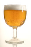 Beer 1. Glass of beer on white background Royalty Free Stock Images