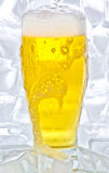 Beer. Cold beer on white background Royalty Free Stock Images