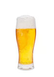 Beer. Isolated on a white background Stock Image