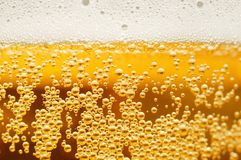 Free Beer Stock Images - 2248494
