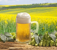 Beer Royalty Free Stock Image