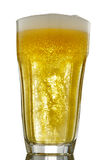 Beer. Cold fresh beer on white backdrop Stock Images