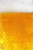 Beer. Close macro image of glass of beer Stock Photography