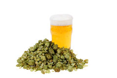 Beer. Glass full of beer and hop isolated on white background Stock Images