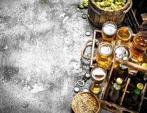 Beer background. Fresh beer with ingredients. On a rustic background Royalty Free Stock Photo