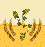 Beer background with hop leaves and wheats Stock Image