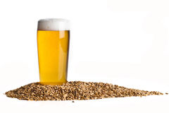 Beer with Barley Royalty Free Stock Images