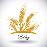 Beer and barley design. Stock Image