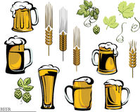 Beer, beer mug, hop, vector, , color, black, illustration, elements of graphic registration. Various options for beer glasses and mugs, ingredients Stock Image