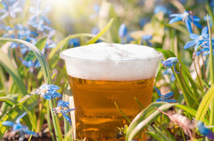 Beer and blue flowers spring, snowdrop Scilla Royalty Free Stock Photo