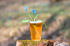 Beer and blue flowers spring, snowdrop Scilla royalty free stock images
