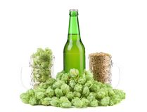 Beer botlle and green hop. Stock Photos