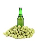 Beer botlle and green hop. Stock Image