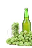 Beer botlle and green hop. Royalty Free Stock Photography