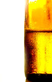 Beer in bottle Royalty Free Stock Photography