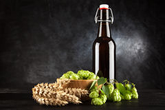 Beer bottle on dark background Stock Photos