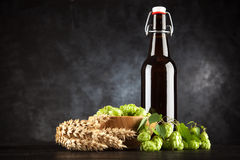 Beer bottle on dark background Royalty Free Stock Photography