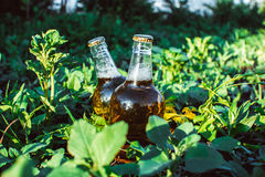 Beer bottle in the grass. Two bottles of beer lying in the grass in the sun Stock Images