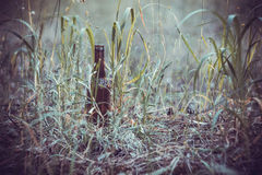 Beer bottle on the ground in the grass Stock Photography