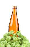 Beer bottle and hop flowers. Stock Photos